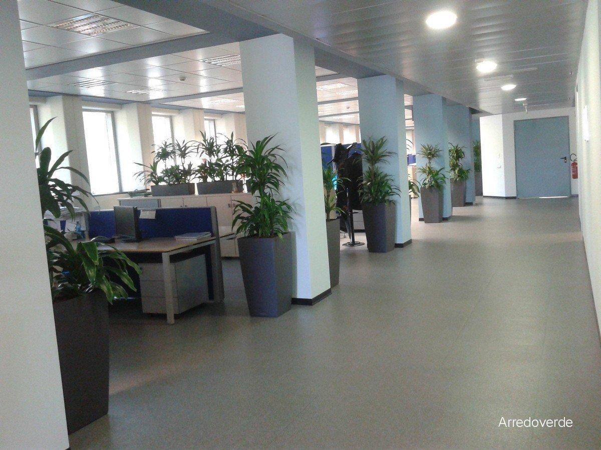 vasi con piante in ufficio