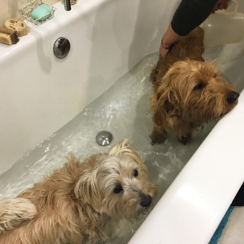 Dog Bubble Bath