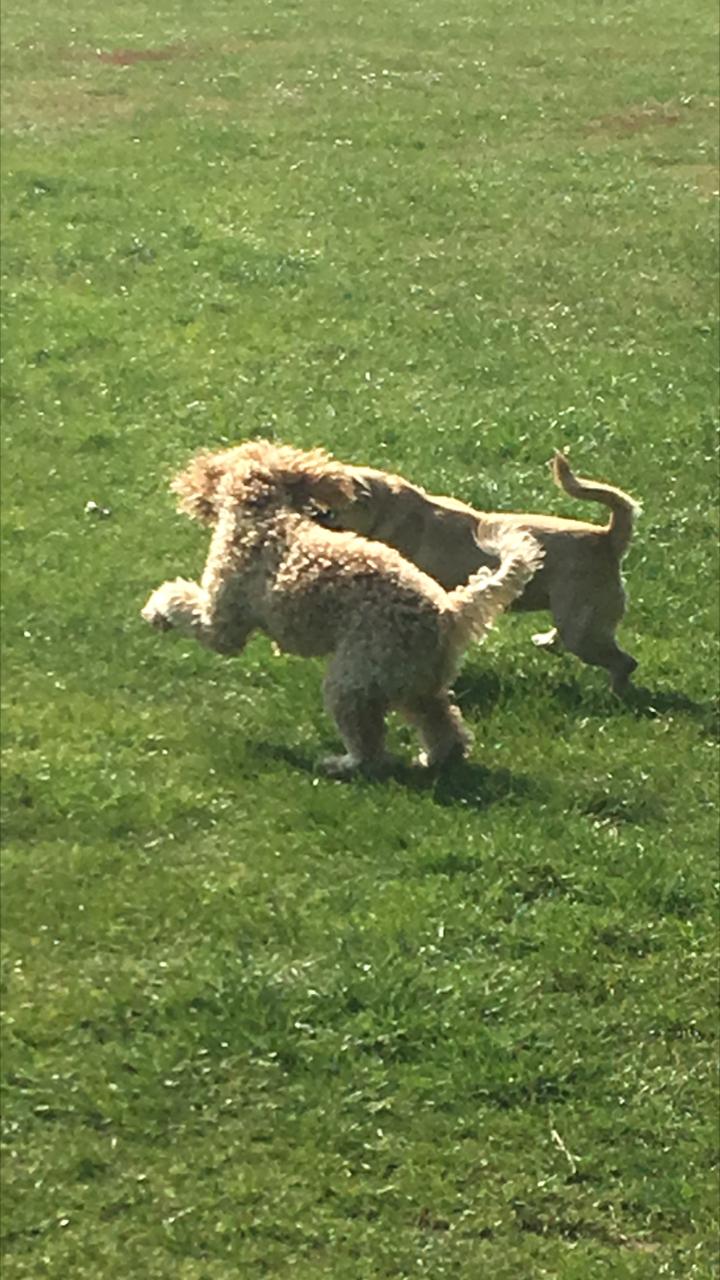 Dog Walking Wimbledon
