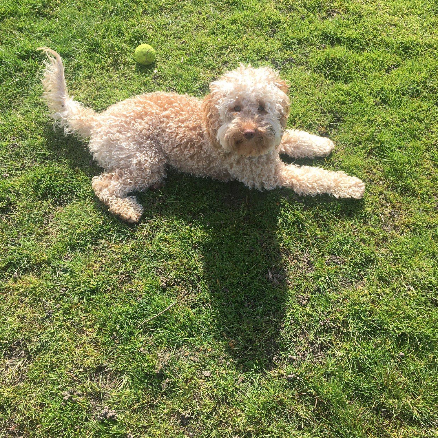Dog Walking in Cottenham Park