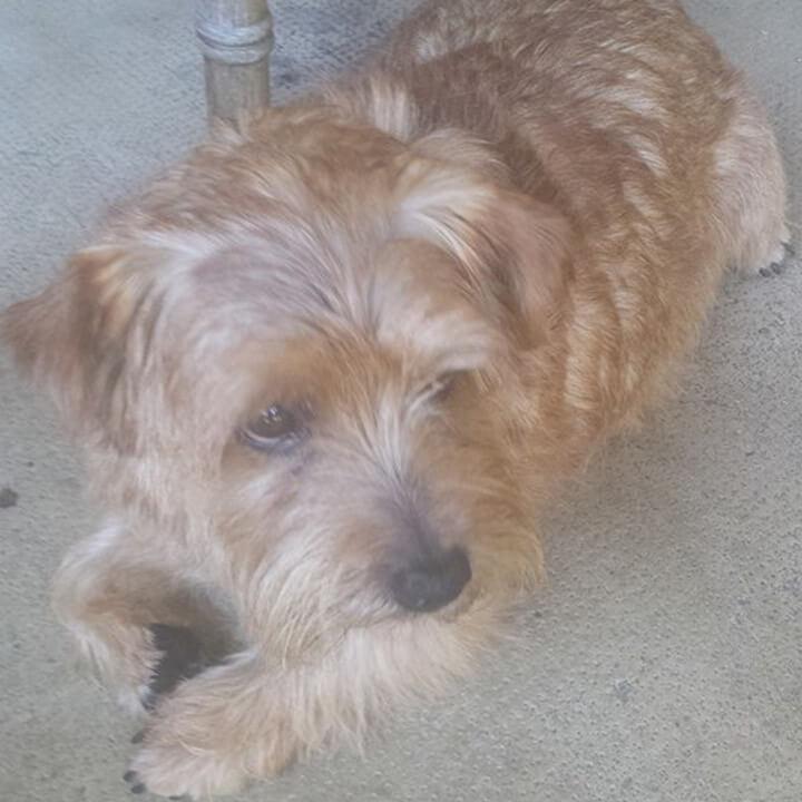 close up of shaggy dog