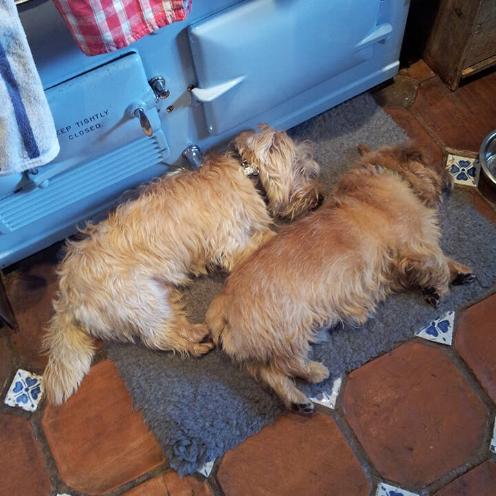 two dogs sleeping on the front door mat