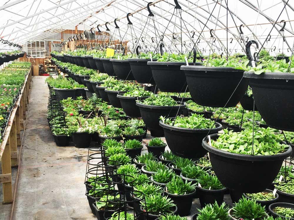 Greenhouse photo 5