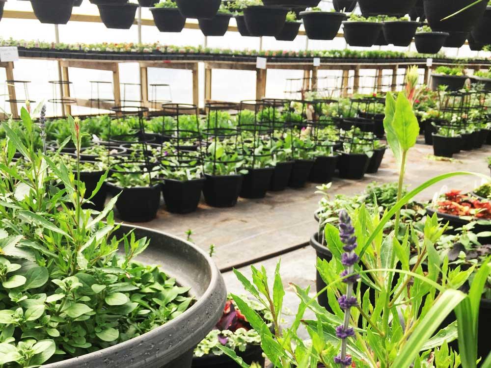Greenhouse photo 7