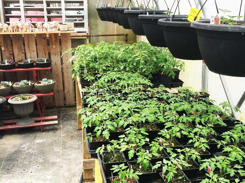 Greenhouse photo 4