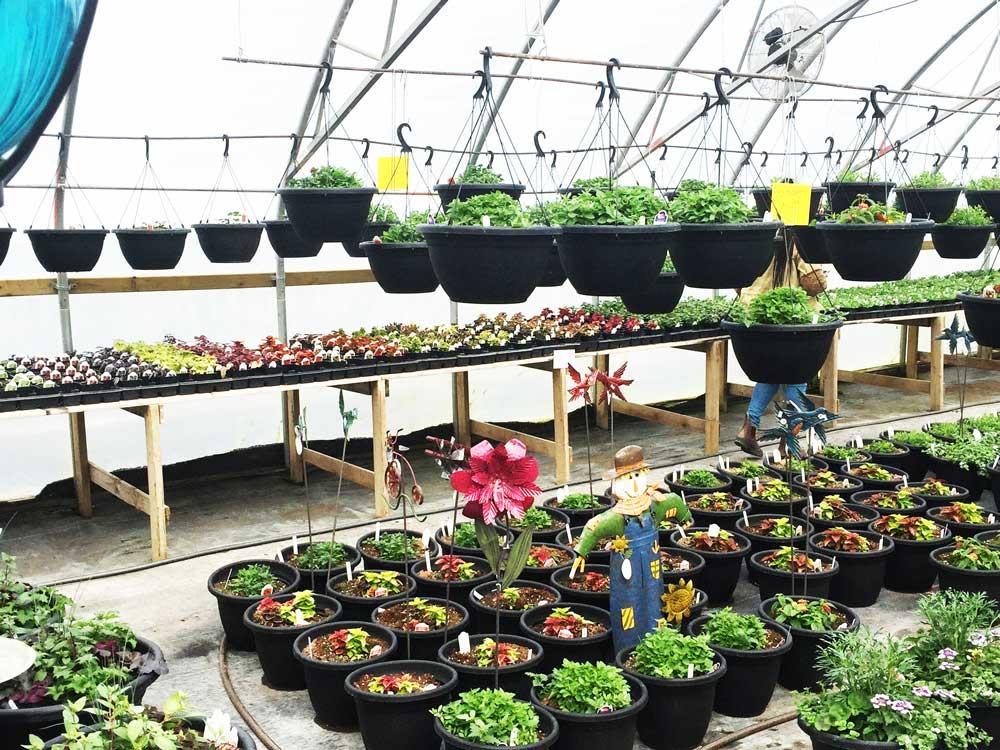 Greenhouse photo 6