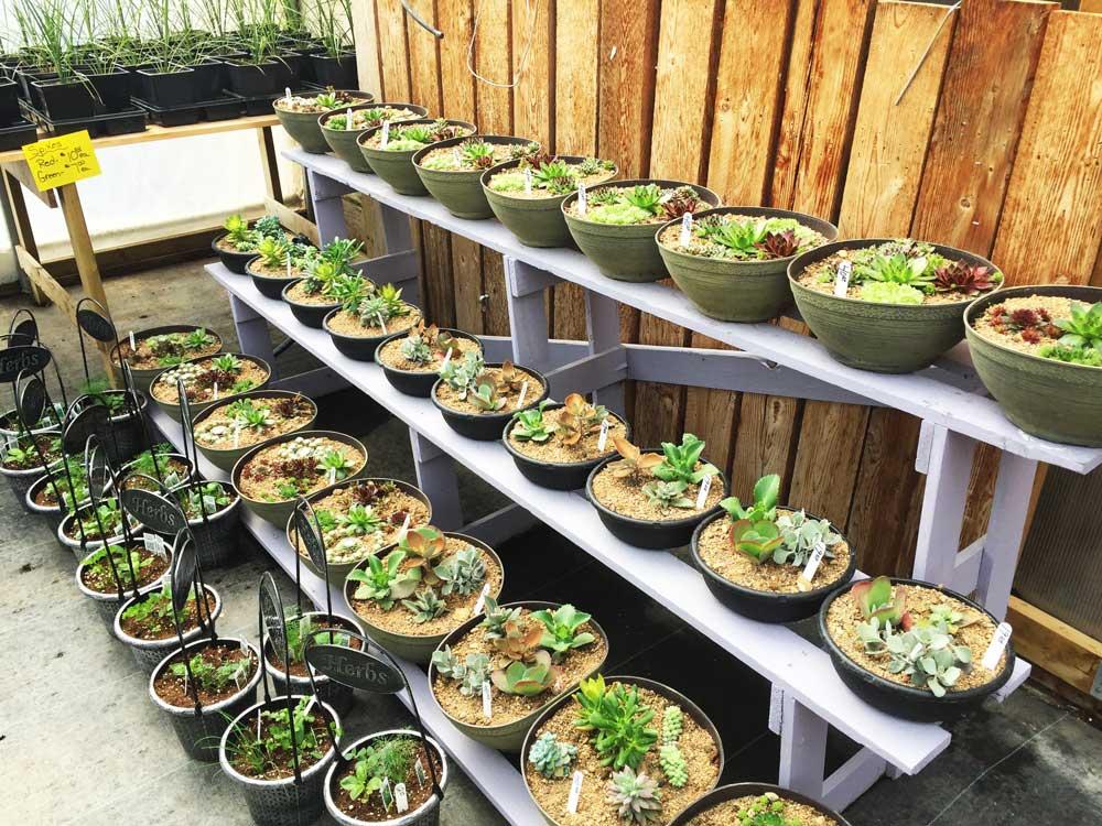 Greenhouse photo 2