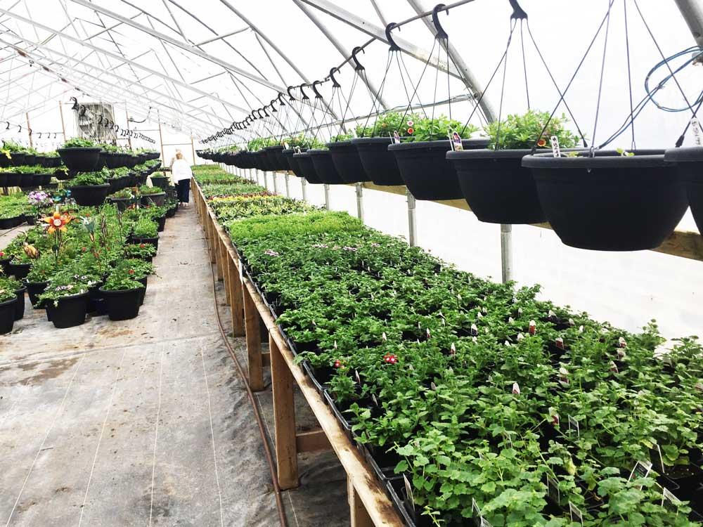 Greenhouse photo 1
