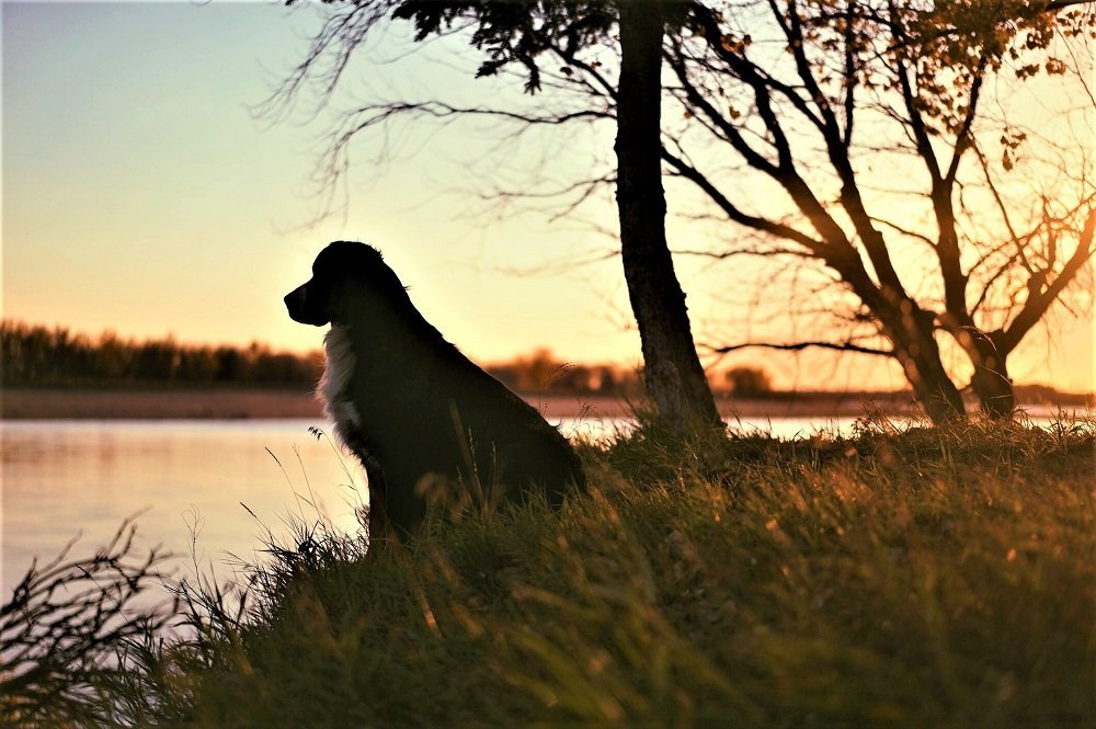 Dog silhouette in front of river photo