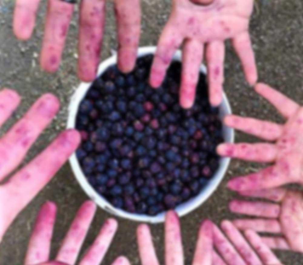 U-Pick Berries photo