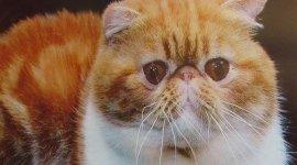 lavaggio gatti