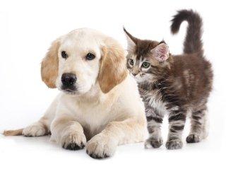 Cat e dog sitter