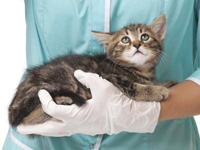 diagnostica veterinaria