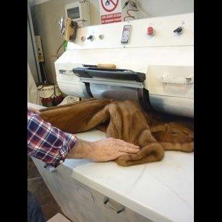 lavorazione sartoriale di una pelliccia