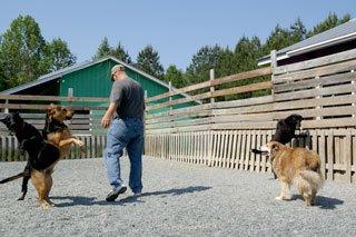 Dog Boarding Graham, NC