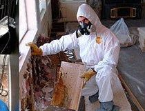 Man performing mold removal in an Orange Beach, AL, home.