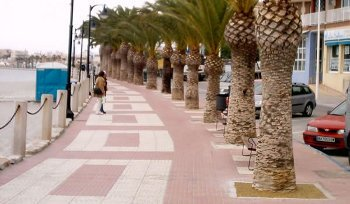 resin bonded paving with palm trees
