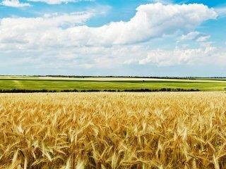 progotti per agricoltura
