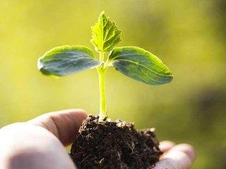 sementi e bulbi