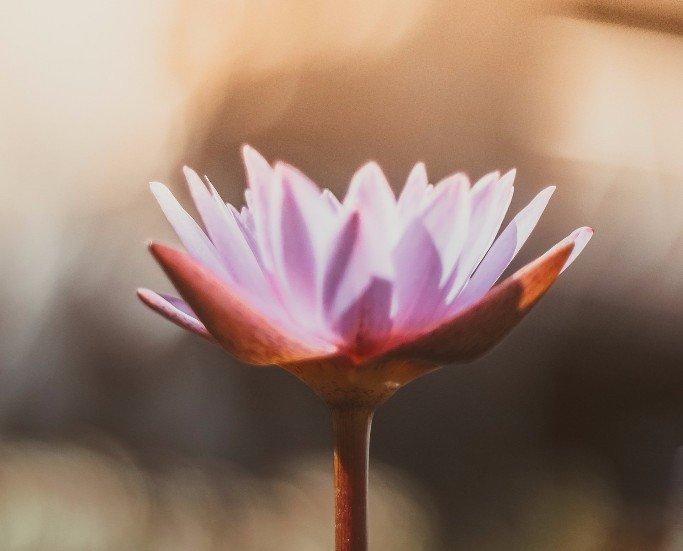 massaggi anticellulite, trattamenti ayurvedici, massaggi orientali