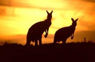 organizzazione viaggi in australia, viaggio di nozze in australia