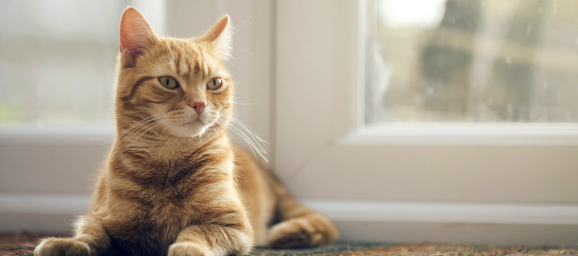 a sitting cat