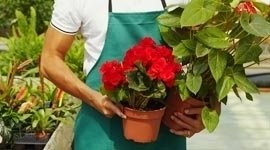 assortimento fiori recisi