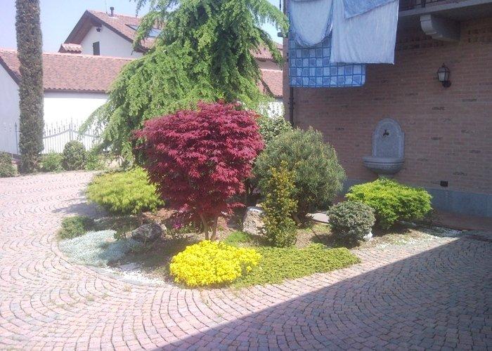 Dettaglio piante da giardino di vario tipo
