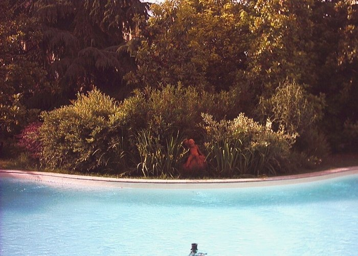 Dettaglio piscina contornata da siepe