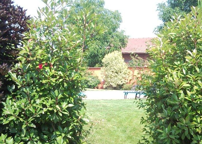 Giardino con piante ad alto busto