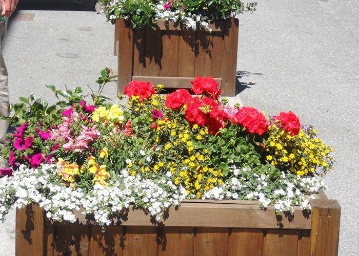 Dettaglio fioriera con fiori di vario tipo