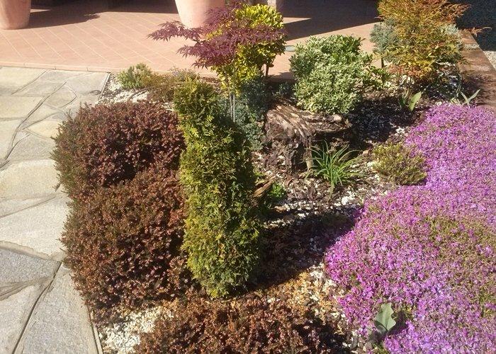 Dettaglio piante da giardino