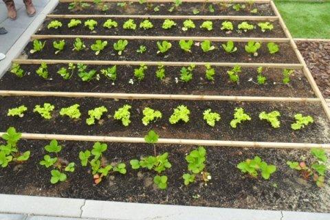 Realizzazione e cura di orti