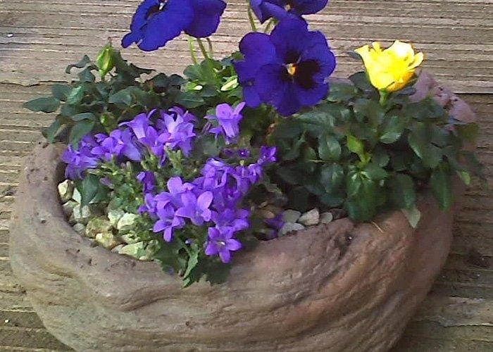 Fioriera in pietra con fiori e piante