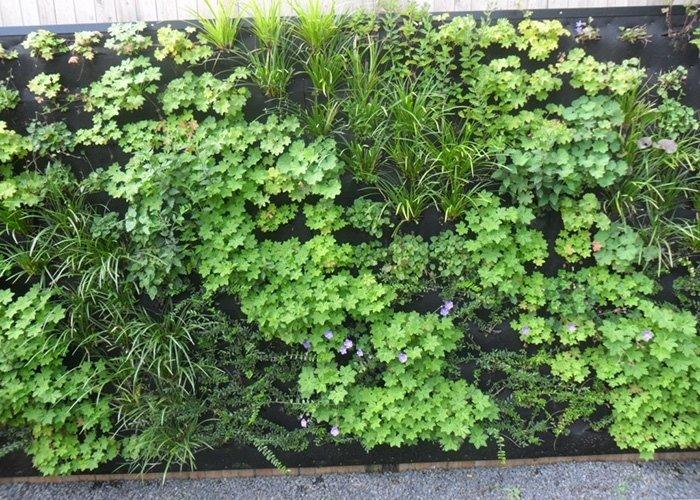 Dettaglio parete con piante