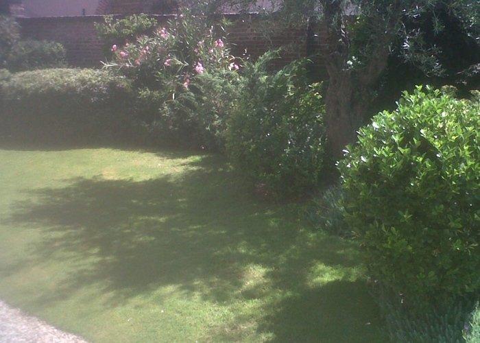 Dettaglio piante