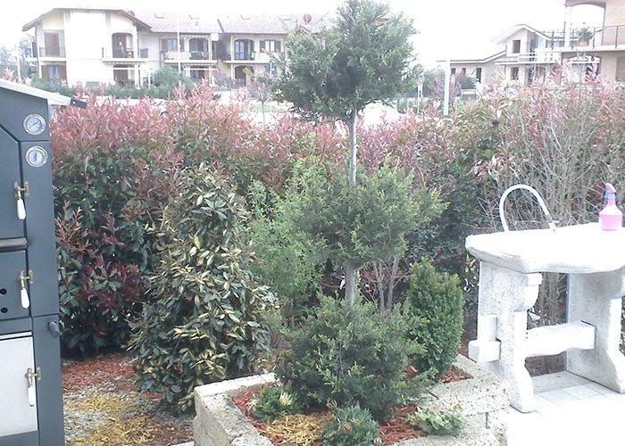 Allestimento giardini domestici
