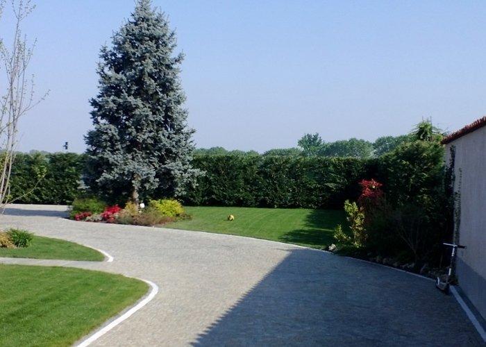Giardino con siepe e arbusti ad alto fusto