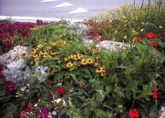 Dettaglio fiori di vario genere su rotatoria