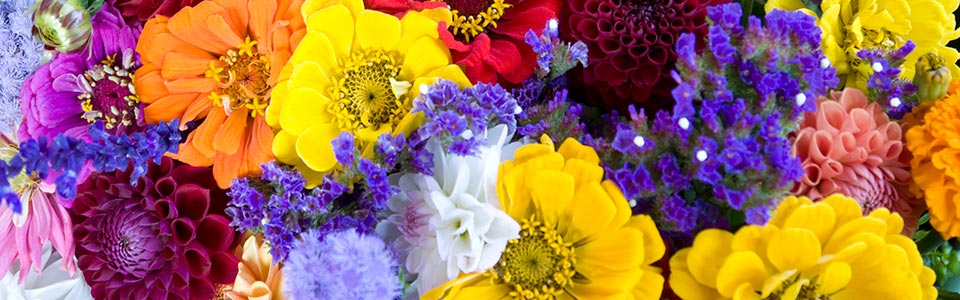 new jersey fresh flowers - farmer joen's farmers market