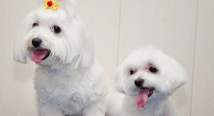Dogs after a professional pet grooming in Lincoln, NE