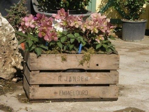 piantine per aiuole, fiori stagionali, fiori per terrazzi