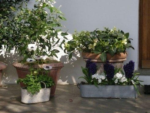 agrumi, piante in vasetti, piante con fiori