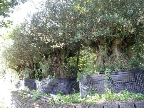 piante, alberi ad alto fusto, alberi da frutto