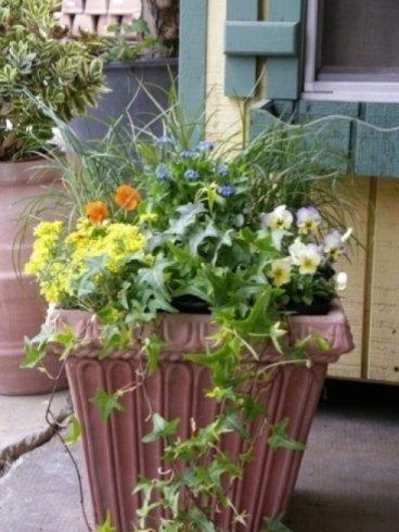 piante di fiori, piante verdi, composizione in vasi