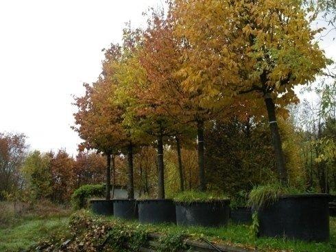 assortimento alberi, alberi per giardini, alberi da frutto