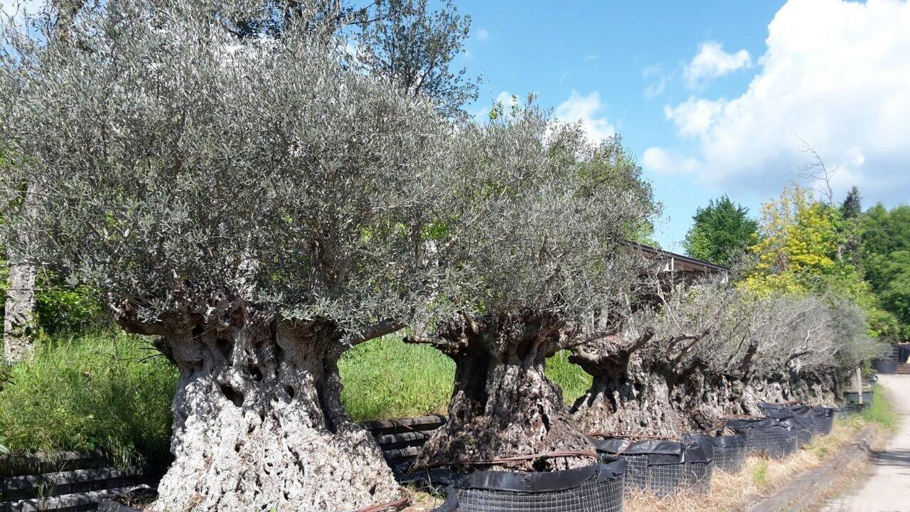 Le piante ed i fiori torino sartorelli vivai fotogallery for Vivaio alberi