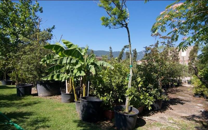 Allestimento giardini San Felice Circeo