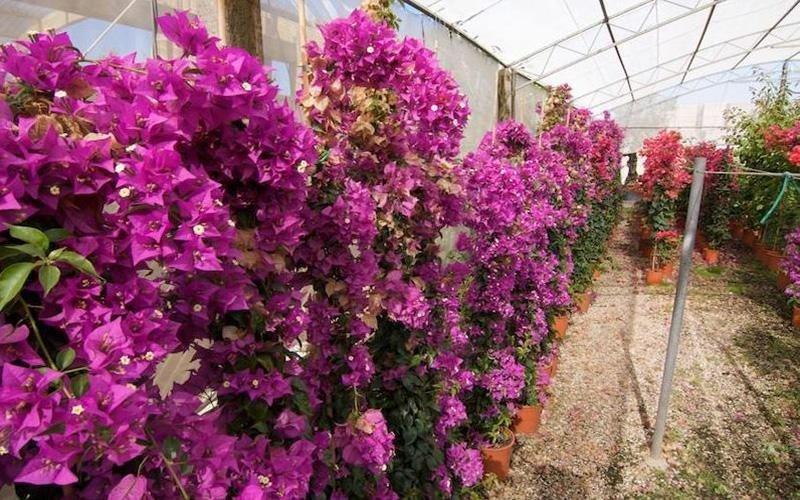 Piante e fiori San Felice Circeo (LT)