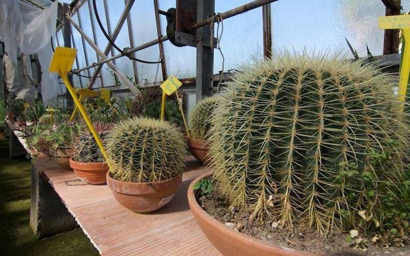 Negozio di piante e fiori provincia Latina